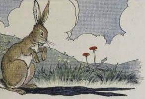 Kelinci dan Telinganya