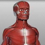Belajar Anatomi Tubuh dari BioDigital Human
