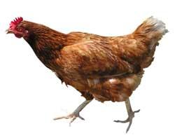 Ayam Den Lapeh