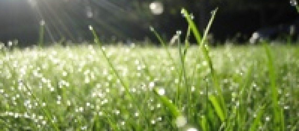 morning_dew source http://fatazahra.blogspot.com/